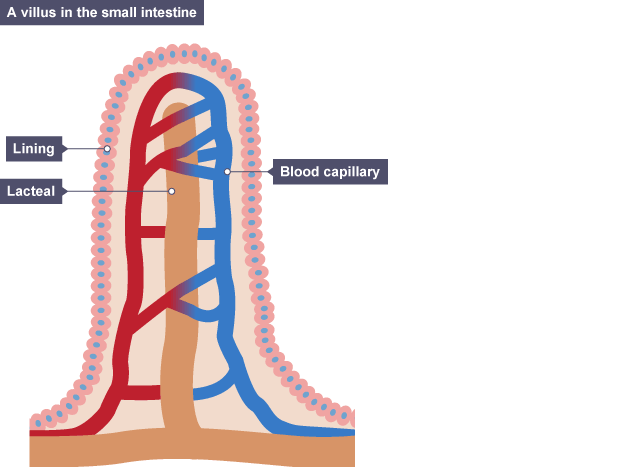 Bbc gcse bitesize science the urinary system mandegarfo bbc gcse bitesize science the urinary system ccuart Image collections