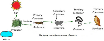 http://2.bp.blogspot.com/-64wh3MSvY6g/VccYa4kpsMI/AAAAAAAAABg/3C_0cQM36SE/s400/plants-is-the-ultimate-source-of-energy.jpg